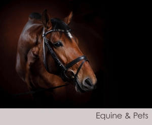equine & pets1